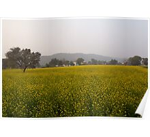 Rural Landscape with a field of mustard Poster
