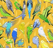 Budgies - Yellow by Tom Henderson