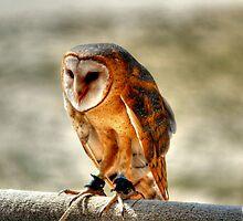 Barn Owl by Larry Trupp
