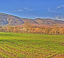 colorful land by Antonio Paliotta