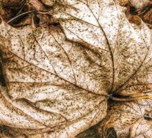 Fallen Sycamore Leaf Sticker