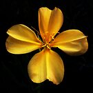 Yellow Evening Primrose by Pro Nature Photography