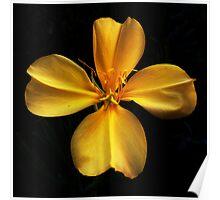 Yellow Evening Primrose Poster