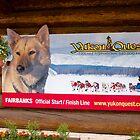 Sign, Sled dog race, Fairbanks, Alaska, 2012. by johnrf
