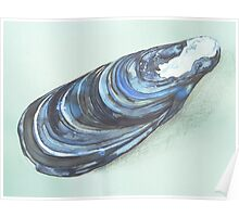 beautiful blue mussel Poster