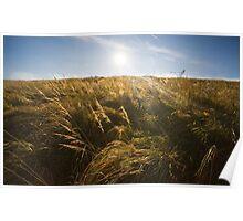 Grassfield horizon. Poster