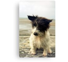 Murphy of Llanfairfechan. Canvas Print