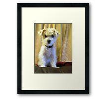 Tigger - dog portrait Framed Print