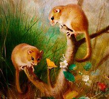 Mice Are Nice by Pamela Phelps
