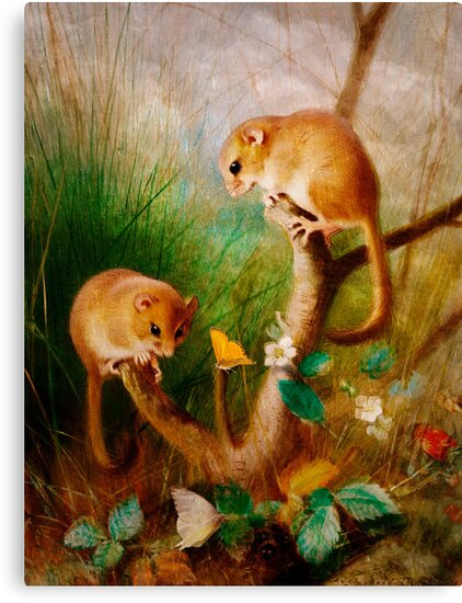 Mice Are Nice by Pamela Phelps