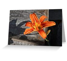 Orange Lily and Weathered Wood Greeting Card