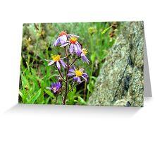 Mountain Wild Flower Greeting Card
