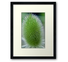 Weeds Can be Beautiful Too 01 Framed Print