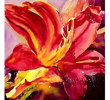 Red Day Lily Photographic Print