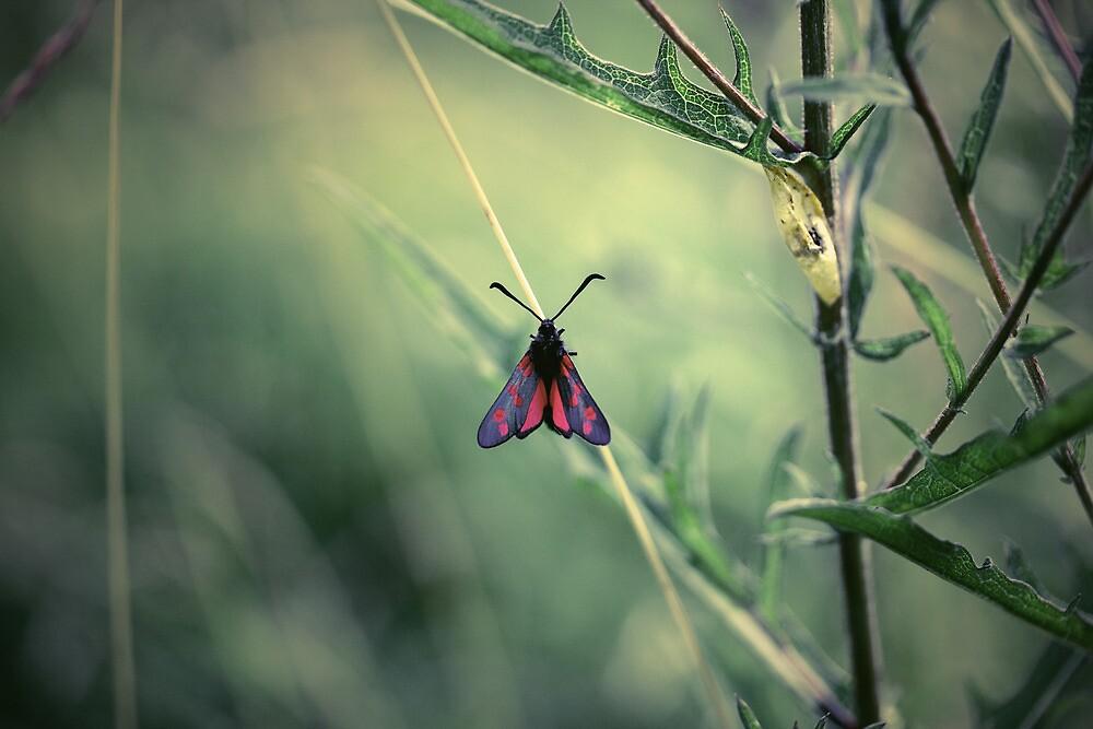 Moth by lorrainem