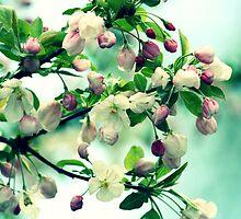 Crabapple Blooms by Linda Fields