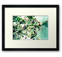 Crabapple Blooms Framed Print