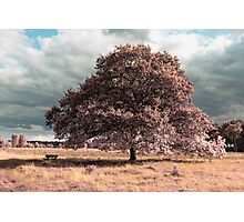 Futuristic landscape IR Photographic Print