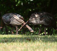 Wild Turkeys by Matsumoto