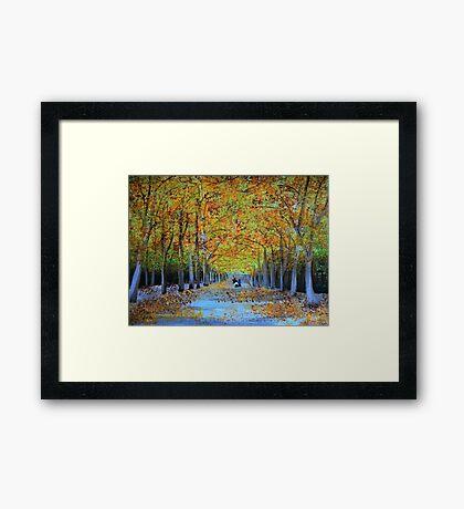 Golden Arch  Framed Print