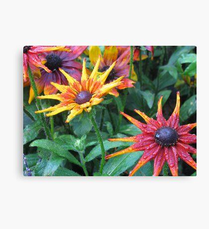 butchart gardens in bloom Canvas Print
