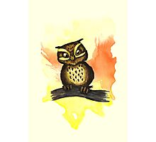 Cute owl. Photographic Print
