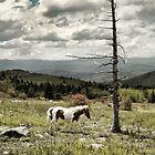 Living Wild - Ponies of the Grayson Highlands by Karen Peron