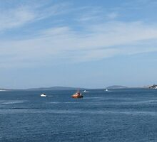 Another very busy day on the River Derwent by kokoro