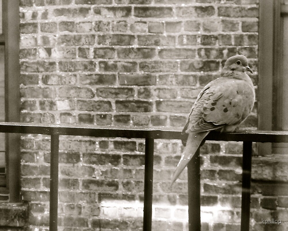 Bird on a Wire by kpallop