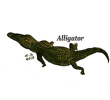 """Aligator""  by Carter L. Shepard Photographic Print"