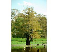 Swamp  Photographic Print