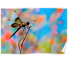 Dragon Fly 'n Colored Sky Poster