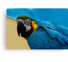Blue-and-Gold Macaw Parrot Canvas Print