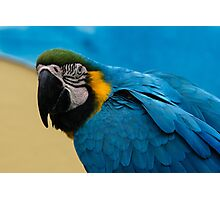 Blue-and-Gold Macaw Parrot Photographic Print