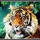Tiger Beauty by Paula Walker
