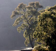 Early Morning Audley, RNP, NSW by Patricia  Knowles