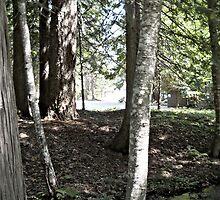 Lake Wenatchee Creek by Ezra-David Saul