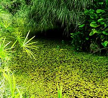 Swamp at the Zoo by Shaneface