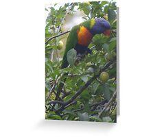 This fruit's not ripe. Rainbow Lorikeet - Trichoglossus haematodus Greeting Card
