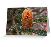 Banksia ashbyi Greeting Card