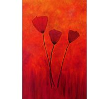 Tall Poppies Photographic Print