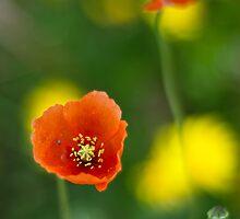 Tiny Poppies by zoundz