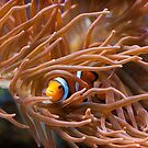Finding Nemo by Simon Marsden