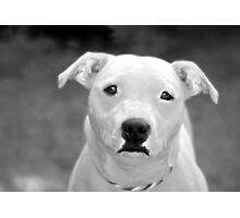 Just because I'm a Staffie Photographic Print
