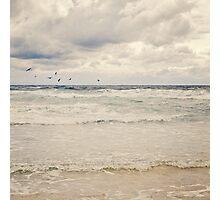 Seagulls take flight over the sea Photographic Print