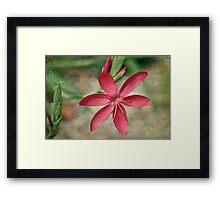 Blossoming Star Framed Print