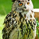 Eagle Owl by Moonlake