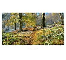 Lickey Hills Photographic Print
