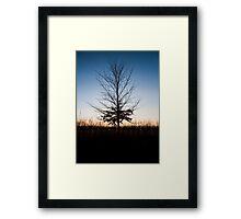 Autumnal Remains Framed Print