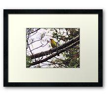 Western Tanager Framed Print
